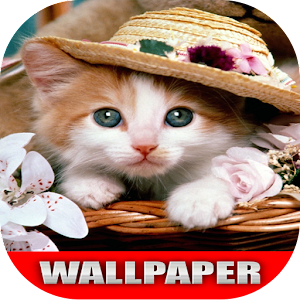 Download free Cat Wallpaper Pocket for PC on Windows and Mac