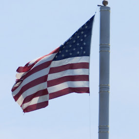 The flag by Jessie Dautrich - Uncategorized All Uncategorized ( flag, red, america, blue, white,  )