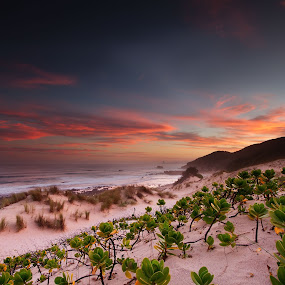 Last light by Bruce Meaker - Landscapes Beaches ( sunset beach seascape clouds )