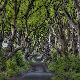 Dark Hedges by Jim Hamel - Landscapes Travel ( ireland, green, trees, dark hedges, antrim )