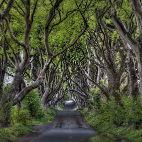 Dark Hedges by Jim Hamel - Landscapes Travel ( ireland, green, trees, dark hedges, antrim )