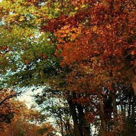 Fall by Nancy Tonkin - Nature Up Close Trees & Bushes
