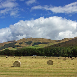 Summer in New Zealand  - January 2006 by Dee Haun - Landscapes Prairies, Meadows & Fields ( clouds, hills, 2006, 098c2e2, summer, praries, meadows, hay stacks, landscapes, new zealand, fields )