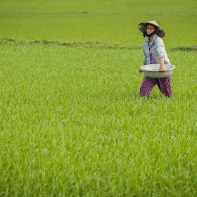 Vietnam-01796-Edit.jpg
