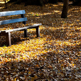 Bench And Fall Leaves by eZeepics Studio - City,  Street & Park  City Parks ( peaceful, seasonal, bench, park, beautiful, forest, quiet, yellow, leaves, tranquil, wooden, season, nature, autumn, foliage, background, outdoor, fall, outdoors, pwcbenches, scene, brown, october, natural )