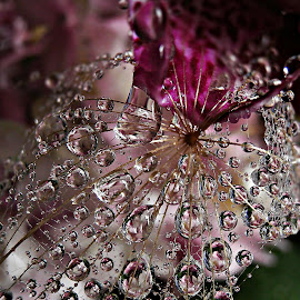 Feelings Of Closeness by Marija Jilek - Nature Up Close Natural Waterdrops