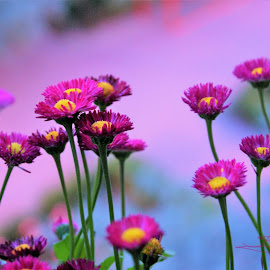 Flowers in the air by Popa Adrian - Flowers Flower Gardens ( flowers  color  twins )