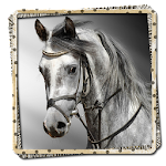 Horses Picture Frames FREE file APK Free for PC, smart TV Download
