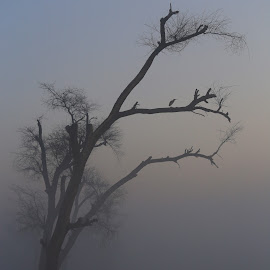 The Haunted Tree  by Khawaja Hamza - Landscapes Forests ( tree, foggy morning, fog, haunted, horror, tree in fog, bird on tree )