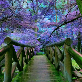 Bridge to the Enchanted Forest by Arie Shively - Novices Only Landscapes (  )