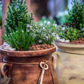 Spring taste by Marius Radu - Flowers Flower Arangements ( spring, pot, nature, flower, arangements )