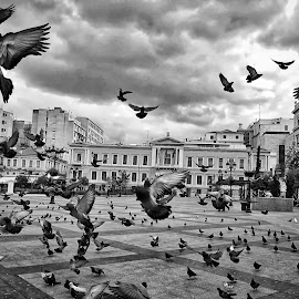 the moment  by Georgios Kalogeropoulos - Instagram & Mobile Android ( sky, black and white, athens, huawei, birds )