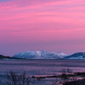 Arctic colors by Benny Høynes - Landscapes Sunsets & Sunrises ( pastel, mountains, cold, sunrise, norway,  )