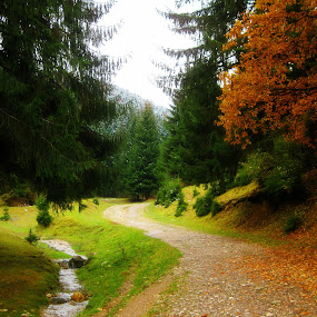by Photo Creations - Landscapes Forests ( autumn, green, trees, forest, river )