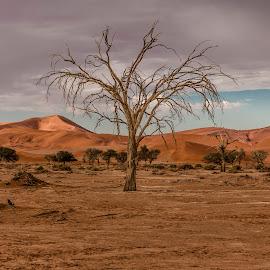 Tree in the Namib Desert by Colin Chalkley - Landscapes Travel ( sossusvlie, sand, namib-naukluft national park of namibia, desert trees, namibia park, african landscape, landscape in africa, cloudy sky, sand dunes, landscape photography, namib national park, travel potography, sunrise )