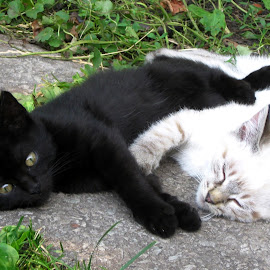 Yin and Yang by Ирина Саунина - Animals - Cats Kittens (  )