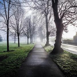 Long Path by Richard Simpson - City,  Street & Park  City Parks ( ireland, pathway, park, co tipperary, tipperary, foggy, tree, fog, parks, path, trees, misty, mist )