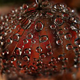 Fairy tale In The Drops by Marija Jilek - Nature Up Close Natural Waterdrops