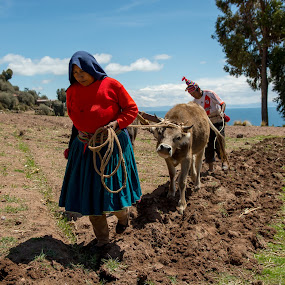 Groundwork together by Hezi Shohat - People Couples ( peru, groundwork, titicaca, nikon )