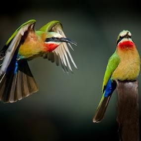 Pleeeeez by Mark Drysdale - Animals Birds
