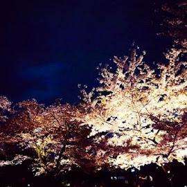 毛利庭園  by Kathy Russo - City,  Street & Park  Neighborhoods ( japan, tokyo, ginza, sakura, travel, cherry blossoms,  )