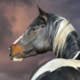 by Michelle Hunt - Animals Horses