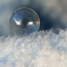 Frozen in Place by Tyler Malnerich - Artistic Objects Still Life ( bubble, winter, cold, tyler malnerich, snow, colorado, bubbles, frozen, nikon )