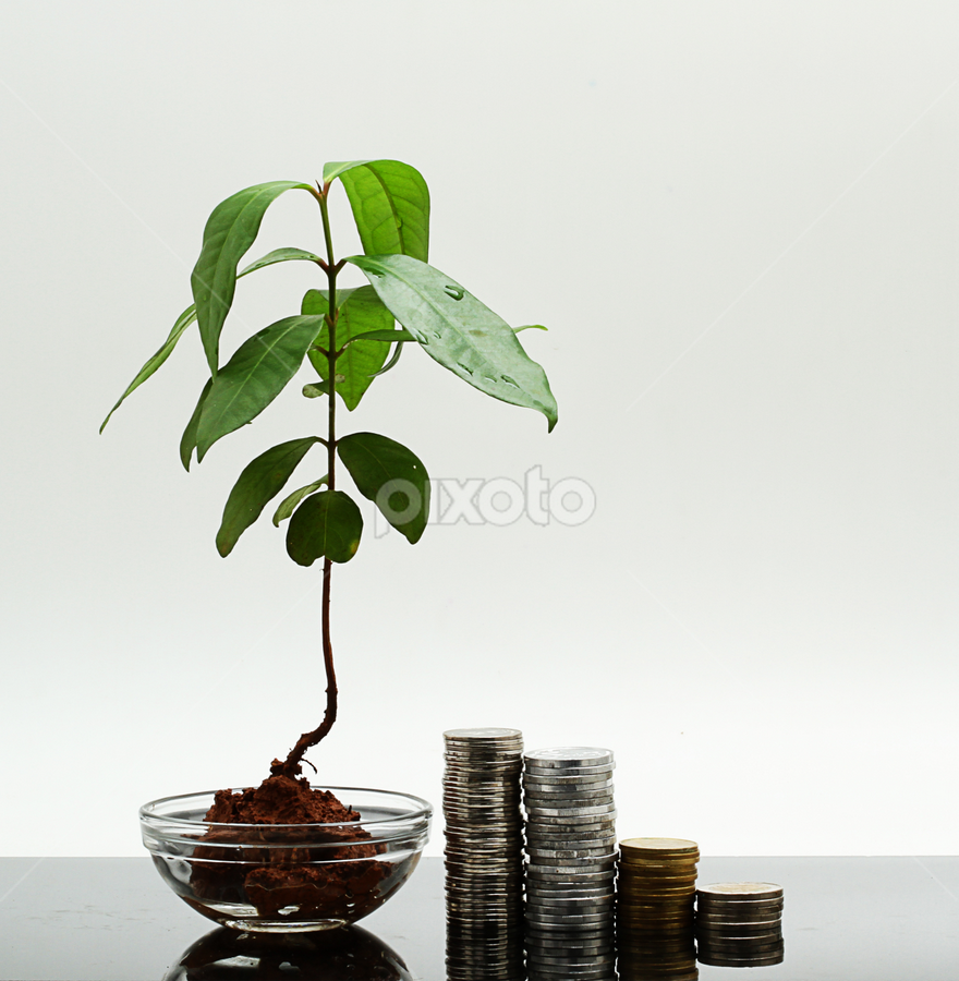 grow your money like plant by Ismed  Hasibuan  - Products & Objects Business Objects ( product, plant, metal, change, money, object, investment )
