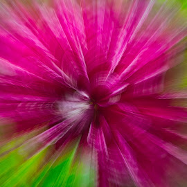 by Jim Jones - Abstract Light Painting ( art, flowers, abstract, colorful, colors )