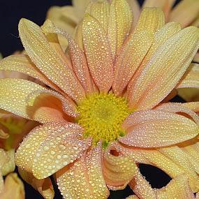 Light Up My Life by Millieanne T - Flowers Single Flower