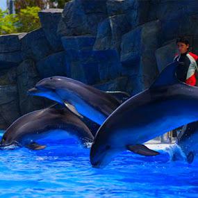 Batumi Dolphinarium by Givi Datunashvili - City,  Street & Park  City Parks ( batumi dolphinarium, 6 may park )