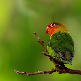 by على القرقورى - Animals Birds