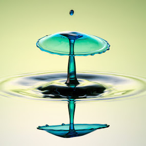 Water Fungus by Markus Reugels - Abstract Water Drops & Splashes ( markus reugels, liquid art, high speed, water drop )