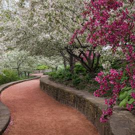 Garden Path by Jon Kinney - City,  Street & Park  City Parks