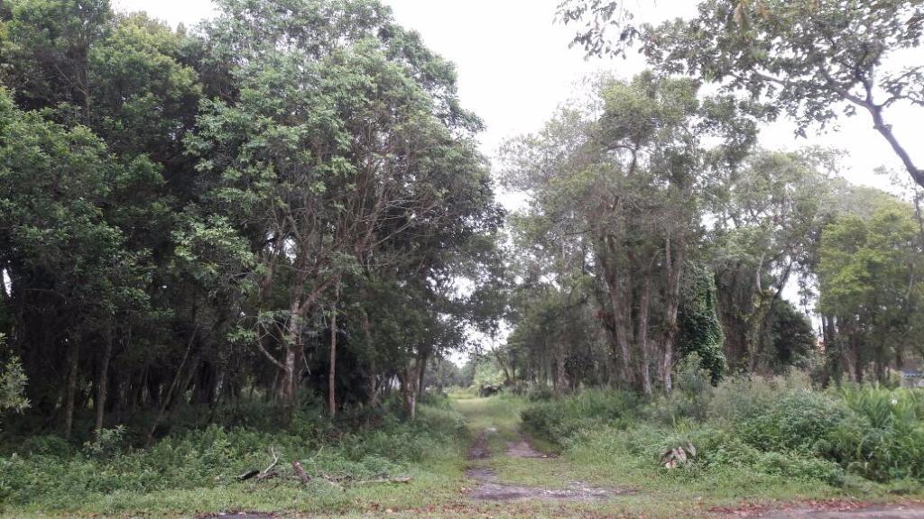 Terreno residencial à venda, Brandalize, Itapoá.