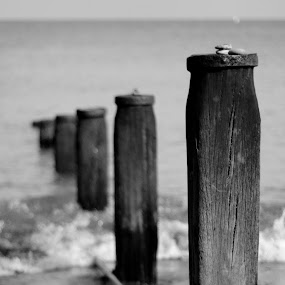 by Mark Niehe - Novices Only Objects & Still Life ( calm, pylon, pole, relax, zen, wave, rock, beach )