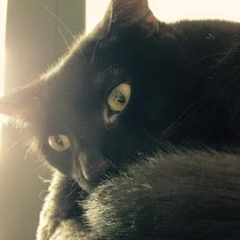 by Wennie Liu - Animals - Cats Portraits ( #jettmycat )