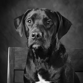 Radar by Chris Smith - Animals - Dogs Portraits ( doggie, dogs, doggy, pet, dog portrait, pooch, dog )
