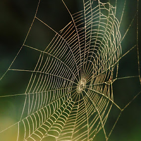 Light Web by Greg Van Dugteren - Nature Up Close Webs