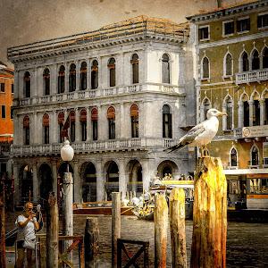 Rome-0223_Bird.jpg