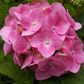 Цветя by Georgi Kolev - Flowers Single Flower ( зелен., цвете., светлина., цветове., листа. )