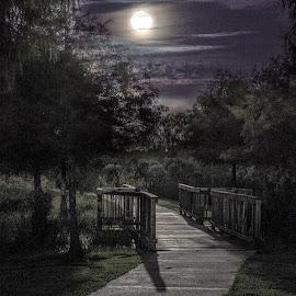 by Anatoliy Kosterev - City,  Street & Park  City Parks ( moon, park, night )