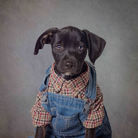 Levi by Tammy Swarek - Animals - Dogs Portraits ( rescuedog, fashion, photography, eldorado, tammyswarek, shelter, plaid, pets, menswear, tammy swarek, black, animal, shirt, arkansas, adoption, shelterpets, clothes, adoptable, tammyswarek cute, overalls, portrait, human, opttoadopt, fineart, swarek, shelterpetsproject, suit, denim, tammy, adorable, puppy, ucaps, dog )