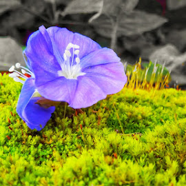 #flower photography  by PIYUSH PATEL - Flowers Flower Buds ( #allnature, #smallgrass, #green, #sunet, #flower )