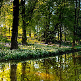 Tranquility by Russell Mander - Landscapes Sunsets & Sunrises ( sunrise, river, wild garlic, bluebells, colours )