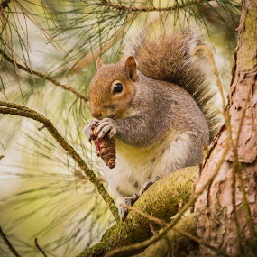 Squirrel snack by Malcolm Hare - Animals Other Mammals (  )