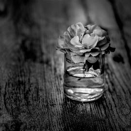 v vodi by Dušan Gajšek - Flowers Flower Arangements ( vikend, narava, cvetje )