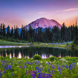 Wildflowers by Tipsoo by Judi Kubes - Landscapes Mountains & Hills ( clouds, water, tipsoo lake, wildflowers, mountain, mt rainier, colorful, sunset, snow, trees, lake, flowers,  )