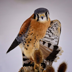 by Amy Ann - Animals Birds (  )