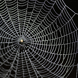 by Carmen Quesada - Nature Up Close Webs ( abstract, webs, designs, nature up close, lines )